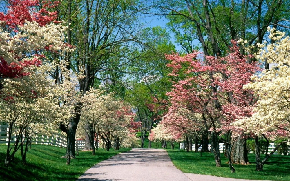 491964-springtime-picture