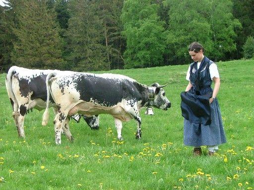 90da13ccee967139a0a68d505189d64b--cowbell-she-is